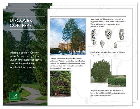 The interpretive panels, available for download,from the Discover Conifers Exhibit
