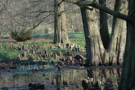 Eastern United States Wetlands Collection at The Morton Arboretum