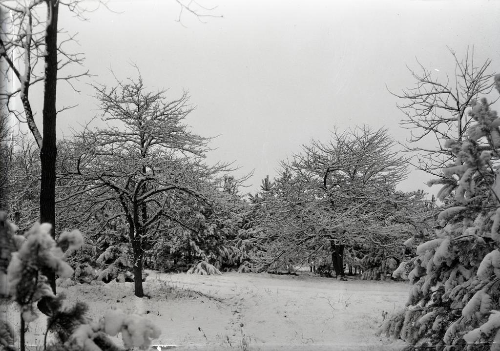 The photograph depicts a forest during the winter. The trees are covered in snow and in front of the trees is an empty space of land covered in snow.