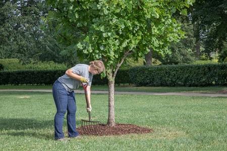 A women is mulching around a tree.