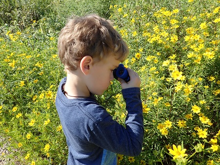 A boy is looking at yellow flowers.