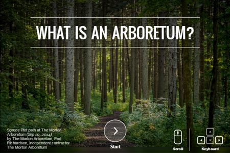 Picture of tall trees with the question What is an Arboretum?