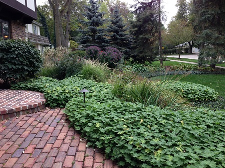 Lush ground cover curves around a brick walkway while deciduous bushes, grasses, and evergreens frame a home.