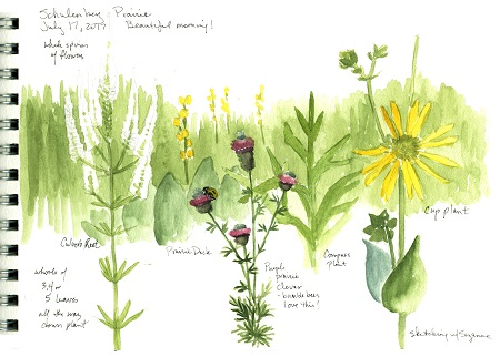 A field sketch of prairie plants using watercolors and pencil .