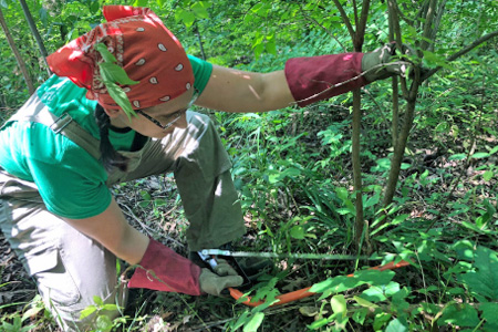 A woman bends low to the ground in the woods, sawing a branch of a plant