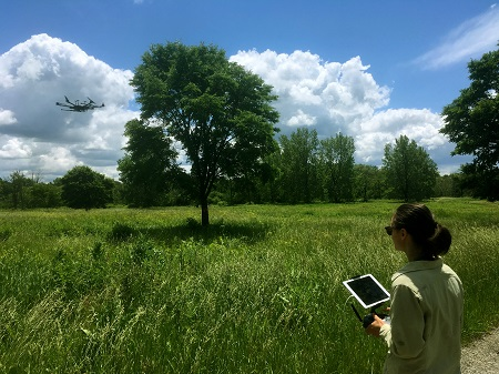 In foreground: REU student using ipad to direct the flight of a drone, In background: drone flying near canopy of tree with green leaves
