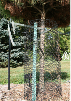 A cage around a young tree