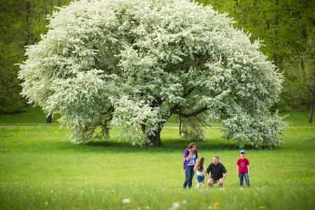 Family by a large tree