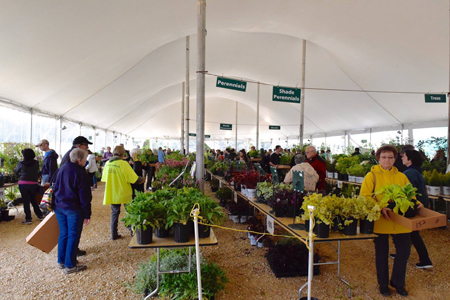 Pots of plants under a white tent