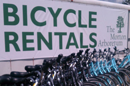 Bikes lined up under a bicycle rental sign