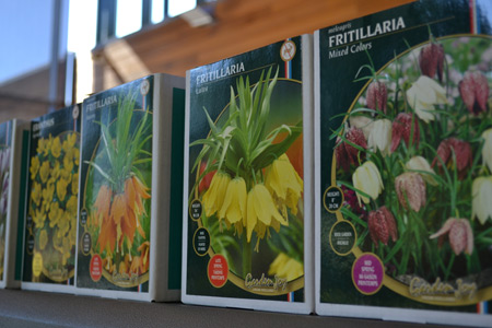 Bulb sale seed packets