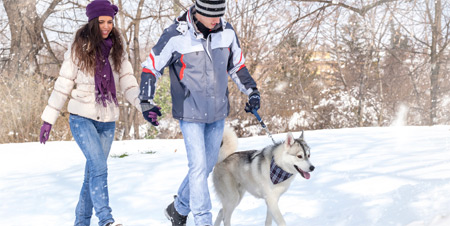 A couple,hand in hand, walking  a dog on a snowy trail