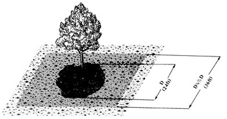 A line drawing of how to fertilize trees and shrubs
