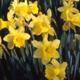 Garden calendar April