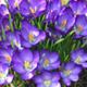 Garden calendar March