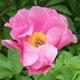 Garden calendar May