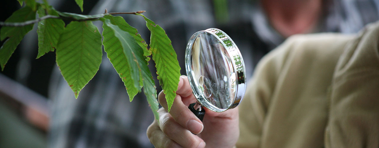 A hand holding a lens looking at leaves