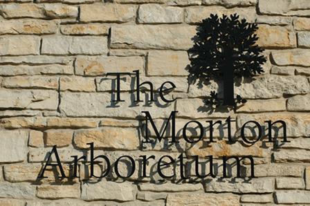 The Morton Arboretum logo- white oak leaves, the full-grown white oak tree and acorns