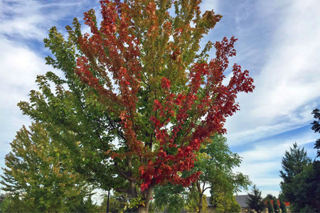 Tree displaying early fall color near the Visitor Center