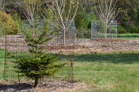 Metal mesh fencing around young trees