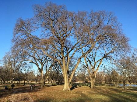 Conservation value in four genera at The Morton Arboretum