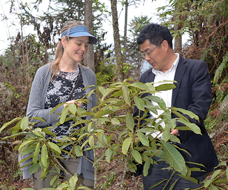 Tree conservation initiatives and collaborations in Asia