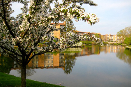 A flowering tree overlooks apartment buildings.
