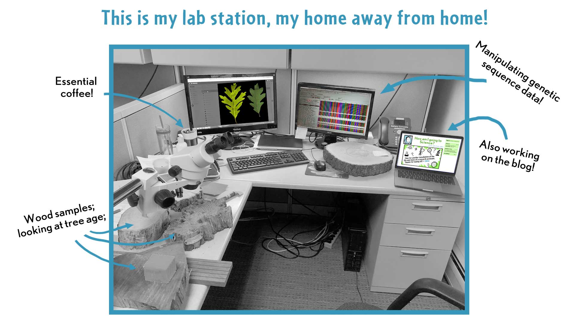 "Chloe, the narrator, says, ""This is my lab station, my home away from home!"" A picture shows a crowded workspace with two computer screens showing tree-related images. She points out wood samples, showing tree age; her coffee mug; gene sequencing data; and her blog."