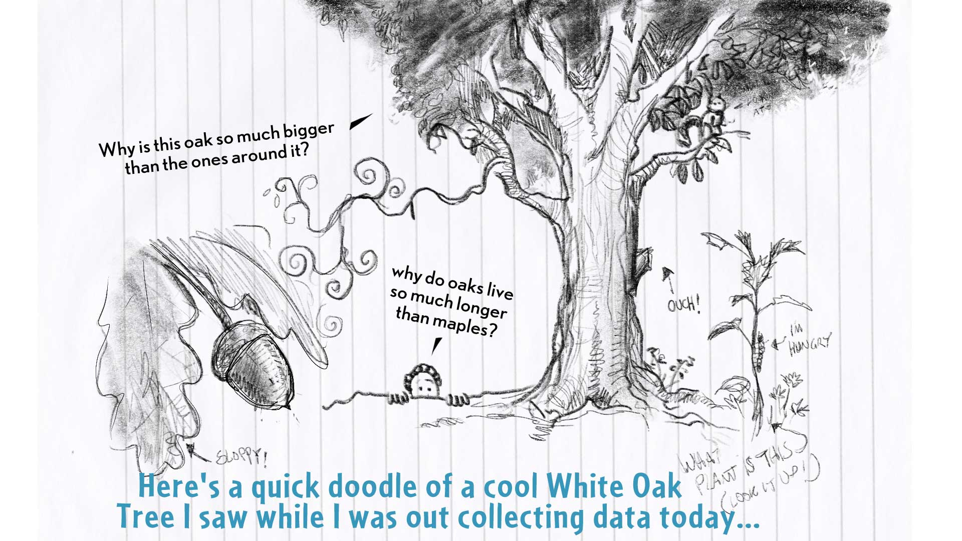"Chloe, the narrator, says, ""Here's a quick doodle of a cool white oak tree I saw while I was out collecting data today..."" A detailed pencil sketch showing an oak tree, an acorn, and another plant that she's labeled, ""What plant is this, look it up!"""