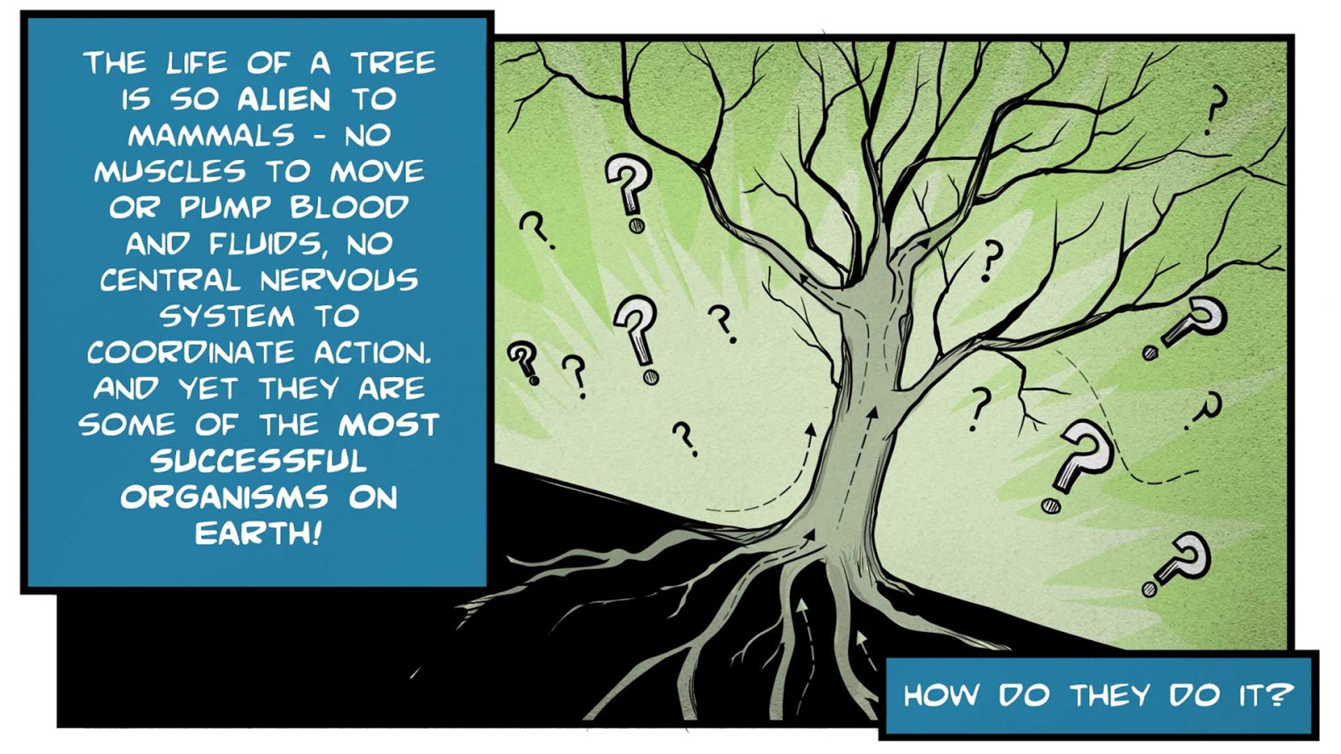 """Felix, the narrator, says, """"The life of a tree is so alient to mammals -- no muscles to move or pump blood and fluids, no central nervous system to coordinate action. And yet they are some of the most successful organisms on earth! How do they do it?"""" A tree is surrounded by question marks. Arrows show how nutrients and fluids move through the roots, trunk, and branches."""