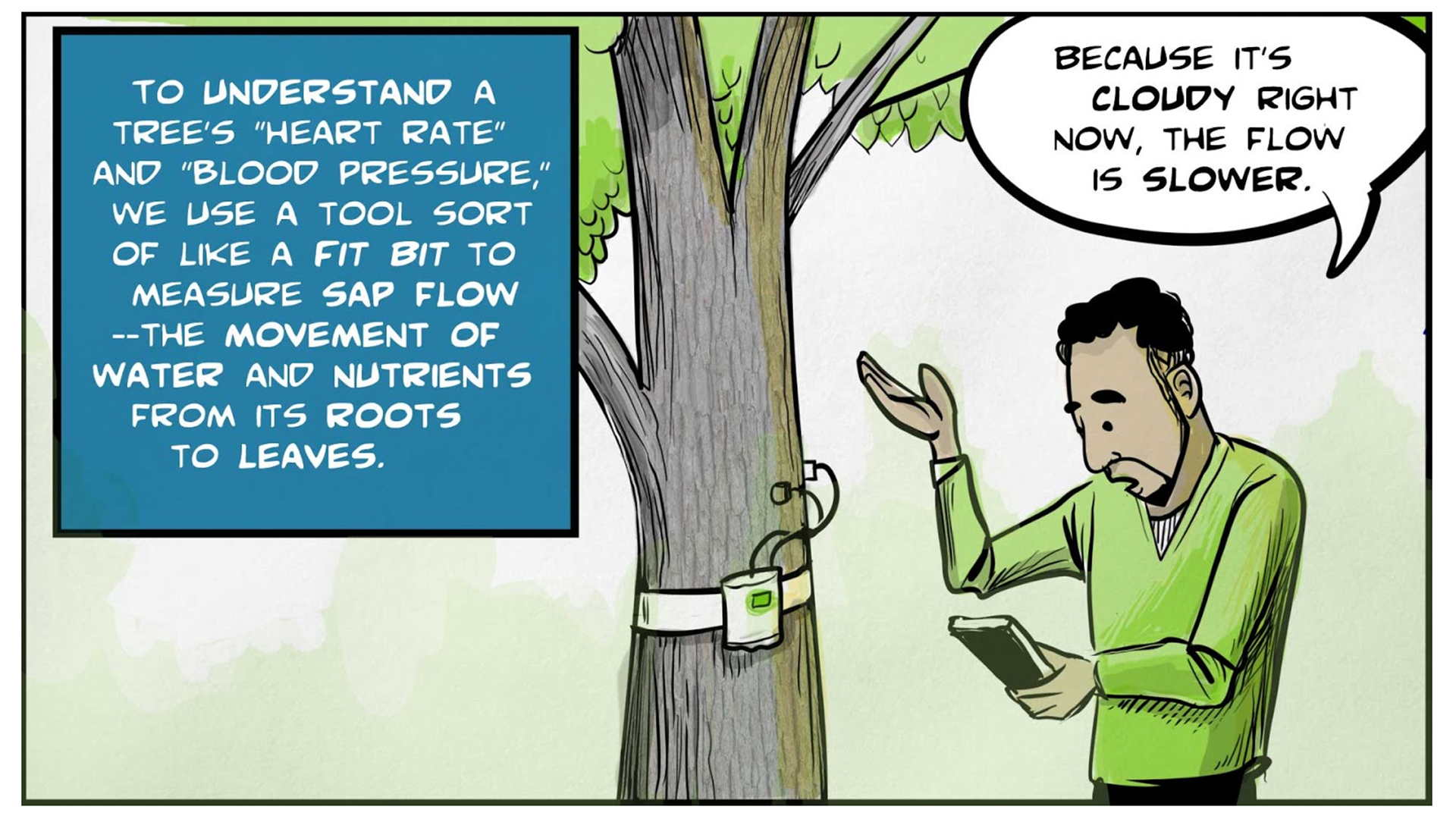 """Felix, the narrator, says, """"To understand a tree's 'heart rate' and 'blood pressure,' we use a tool sort of like a Fit Bit to measure sap flow -- the movement of water and nutrients from its roots to leaves."""" He stands by a tree, looking at a tablet in his hand and gesturing with his hand. The tree has a band around its trunk with a device measuring sap flow. Felix says, """"Because it's cloudy right now, the flow is slower."""""""