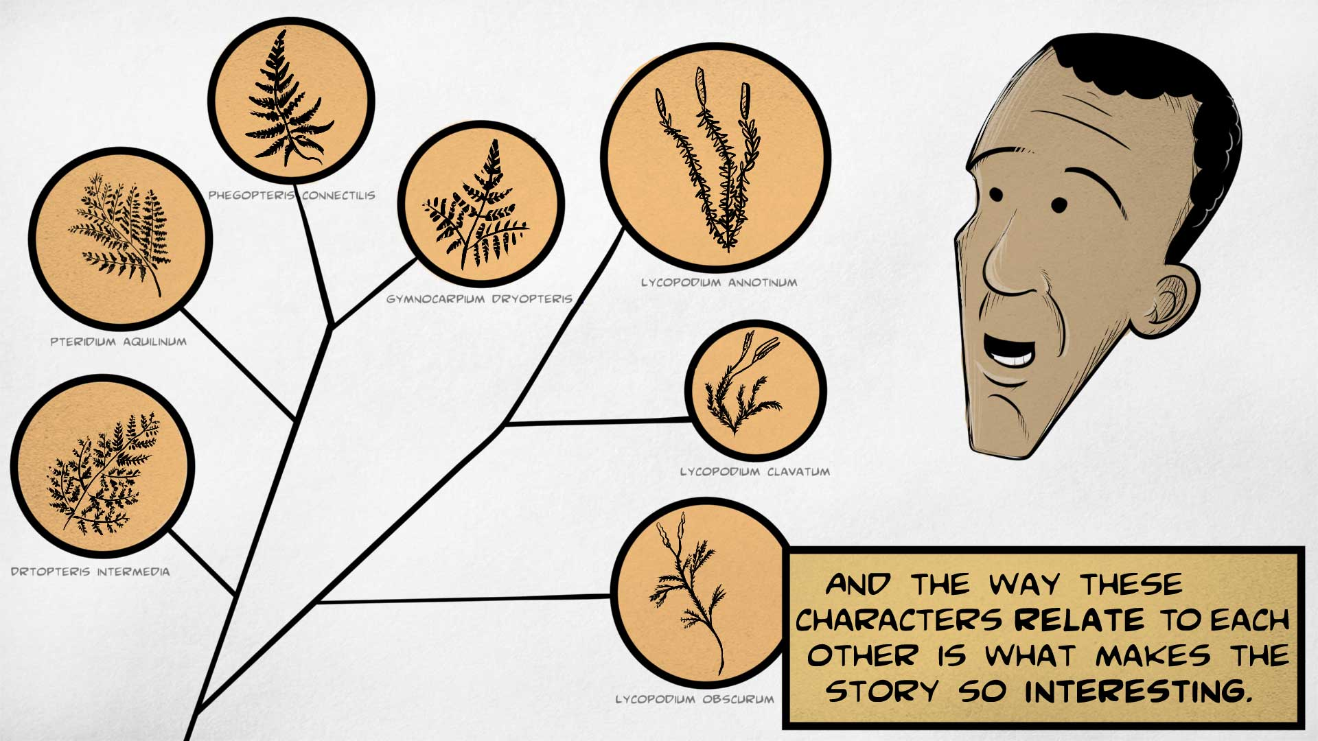 "Leo, the narrator, says, ""And the wy these characters relate to each other is what makes the story so interesting."" He is looking at a family tree of different plant species, including Lycopodium obscurum, Lycopodium clavatum, Lycopodium annotinum, and others."
