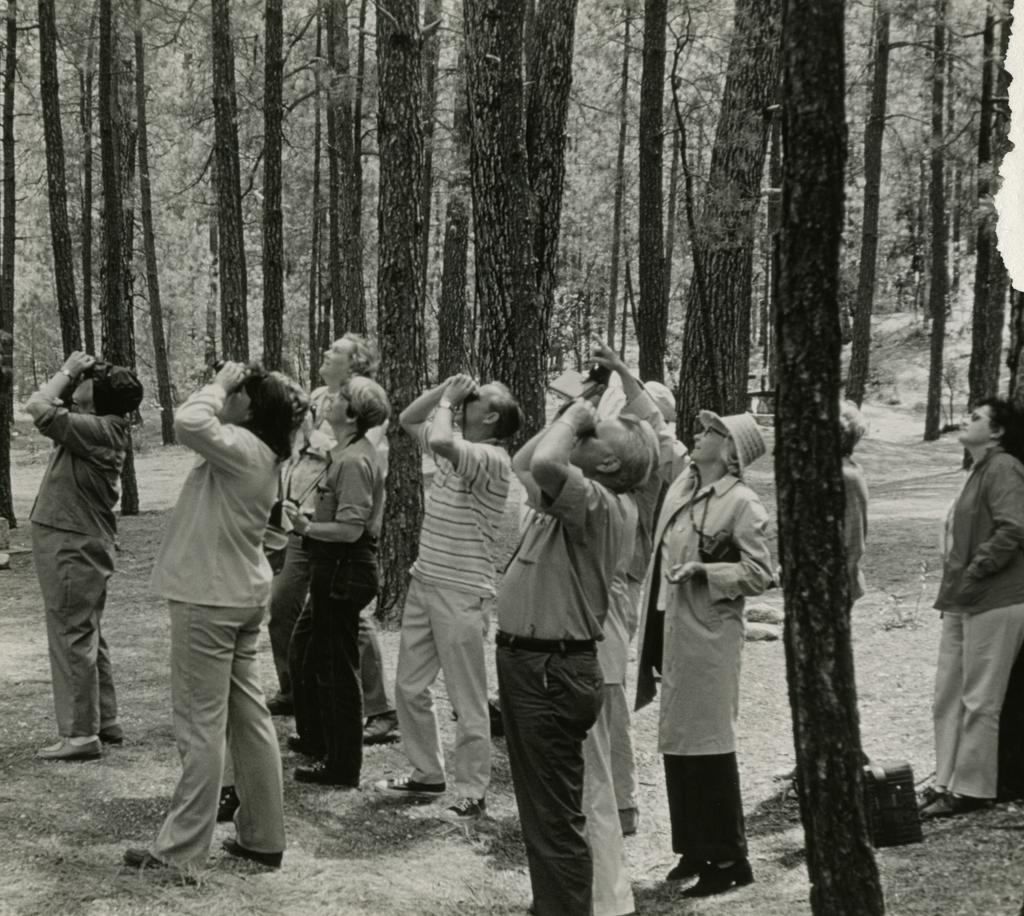 A black and white photograph of a group of people in the forest. They are using binoculars to look at the sky, presumably looking at a bird.