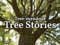 This Arbor Day, The Morton Arboretum and Openlands Ask, 'What's Your Tree Story?'