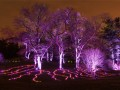 Tickets on Sale for Illumination: Tree Lights at The Morton Arboretum