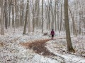 Forest Therapy Winter Walks (2 hour)