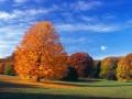 Fall Foliage Walking Tour
