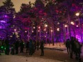 Illumination: Tree Lights at The Morton Arboretum By the Numbers
