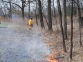 New Study Suggests Frequent Burning May Hinder, Not Help, Future Oaks