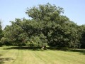 Arboretum Researchers Find Nearly One-Fourth of Oak Species in the U.S. are of Conservation Concern