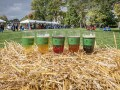 Toast Fall at The Morton Arboretum's Cider and Ale Fest