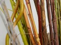 Stems of Woody Shrubs Provide Colorful Visual Interest in Winter