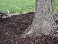 Why and How to Spread Mulch
