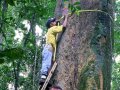 Researchers assemble first comprehensive checklist of Panama's trees with geographic ranges