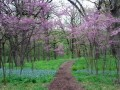 Best Spring Hikes