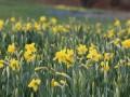 Virtual Bloom Report: April 14, 2020