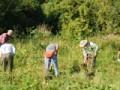 Morton Arboretum Announces New Name for Natural Areas Restoration Program