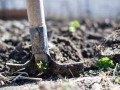 Five Tips to Avoid Soil Compaction in Your Yard