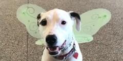 Dog Admission Day
