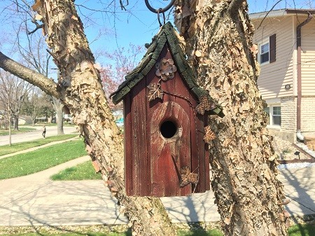Self-Guided Family Play and Exploration: Nests and Eggs